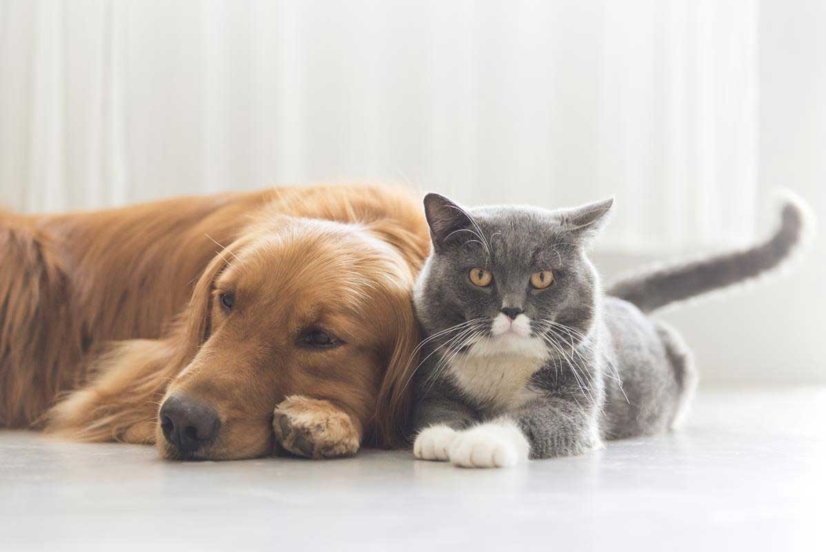 about our veterinary practice Montgomery, AL